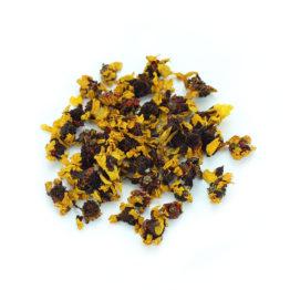 chrysanthème des neiges