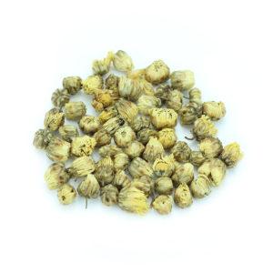 fleurs de chrysanthème